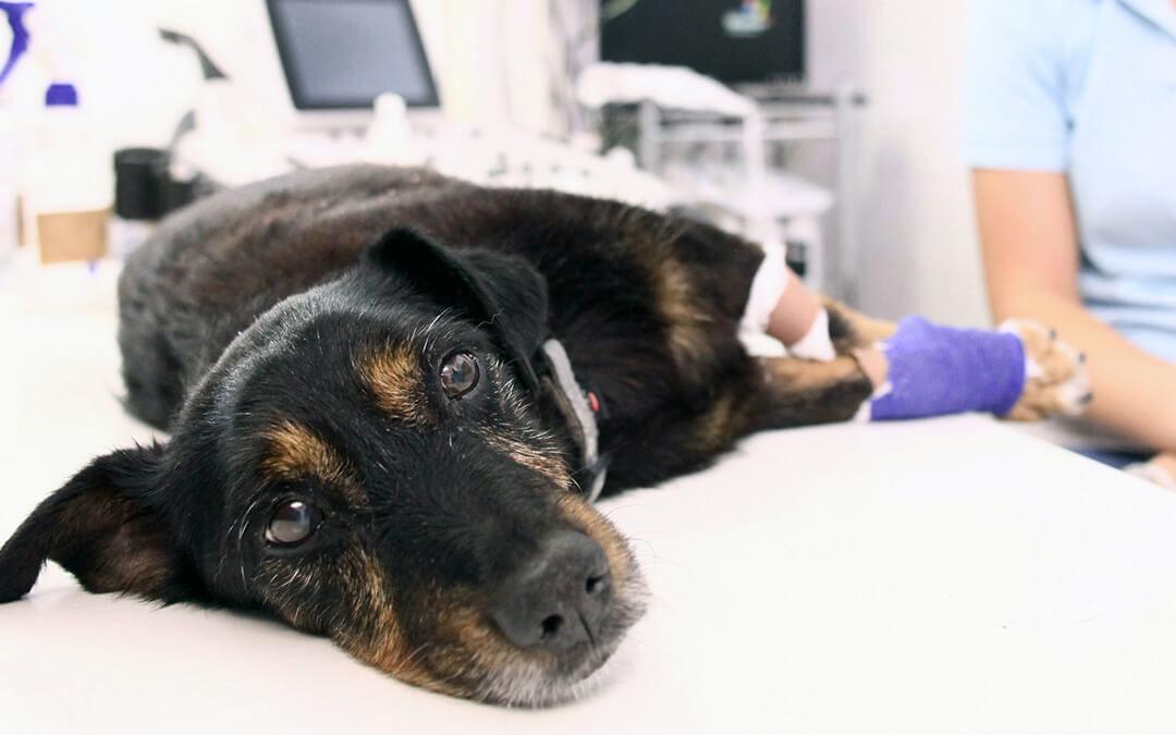 Fetch a Dog Some…Oxygen? 6 Ways Animals Receive Oxygen in Veterinary Medicine